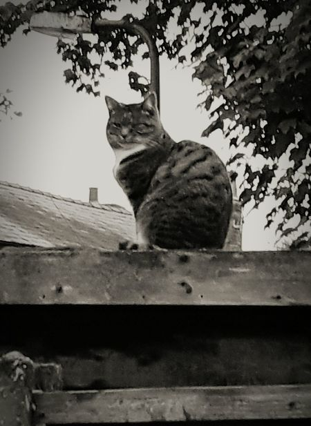 Cat On A Shed Roof. Up On The Roof Cats Of EyeEm Cats Rule The World.