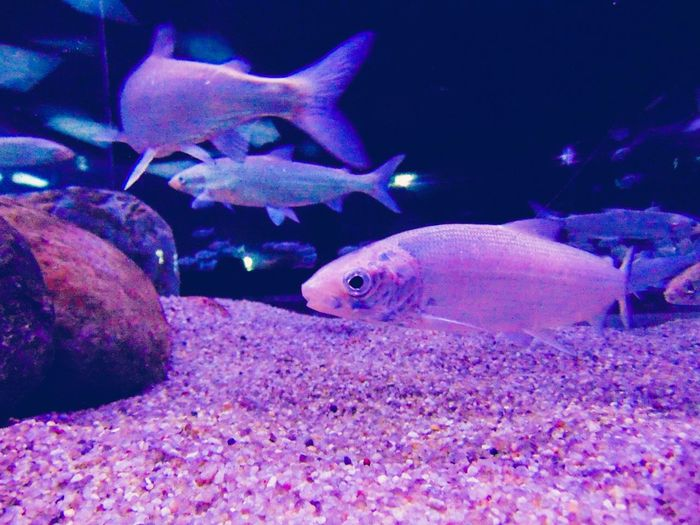 Animal Themes Sea Life Fish Animals In The Wild Sea Zoology Animal Nature Beauty In Nature Underwater Wildlife UnderSea Close-up Aquatic Water рыбки Pink Color
