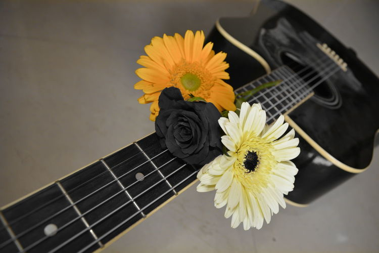 High angle view of flowers on guitar