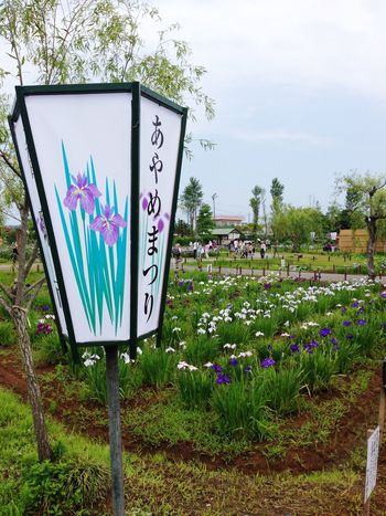 Aquatic Botanical Garden. Flowers Nature Tadaa Community Check This Out Traveling Garden Iris Lantern Summer Sawara Katori City