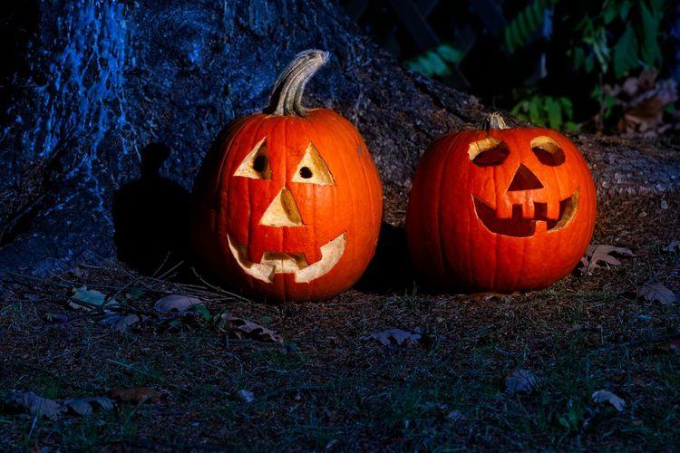 View of pumpkin on field during halloween