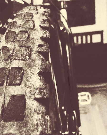 She is awesome... ❤️ MTB Downhill Bicycle Freedom Fat Tires Maxxis Extreme Sports