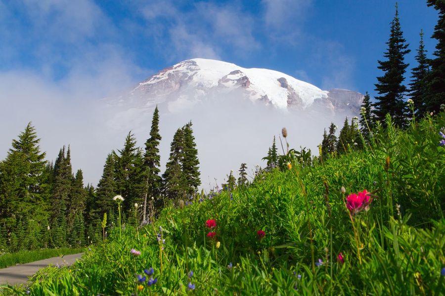 Tranquil Scene Beauty In Nature Mountain Snow Nature Scenics Snowcapped Mountain Glacier Volcano Landscape Mt. Rainier Mt. Rainier National Park