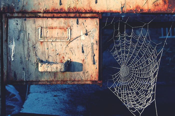 Workbench with Frosted Spiders Work Spider Web Spider Frosty Frosty Nature Frosty Morning Frosty Web Winter Sun Winter Sunshine Winter Morning Winter Weathered Bad Condition Shades Of Winter Shades Of Winter