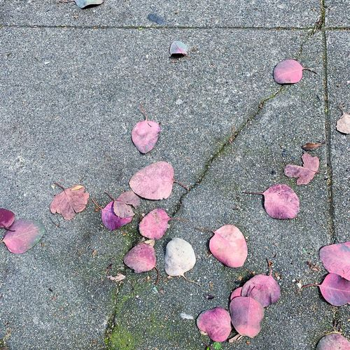 High angle view of pink petals on street