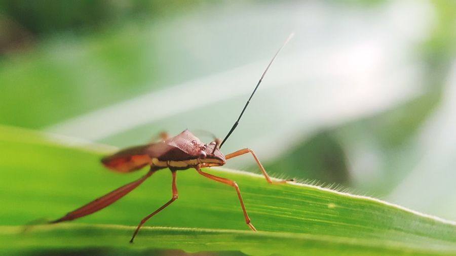 Leaf Full Length Insect Spider Animal Leg Close-up Animal Themes Arthropod Invertebrate Beetle Animal Antenna Grasshopper Butterfly - Insect