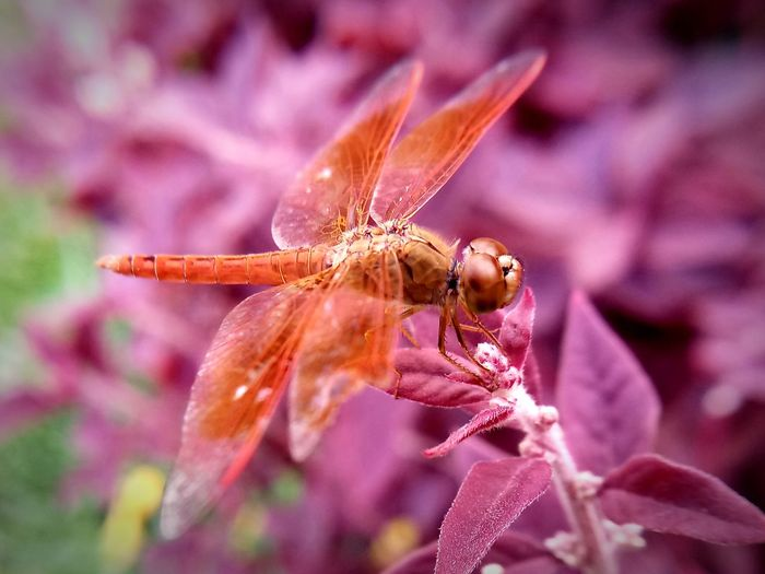 Animal Themes Animal Wildlife Animals In The Wild Beauty In Nature Close-up Day Fragility Insect One Animal Outdoors Plant