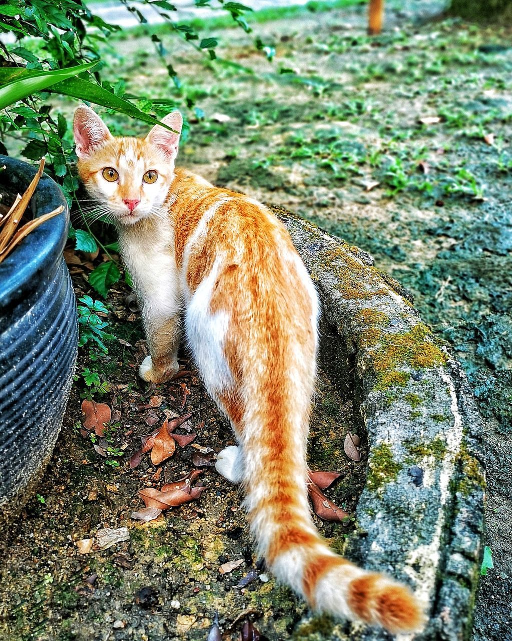 animal themes, mammal, domestic, animal, pets, domestic animals, domestic cat, cat, one animal, feline, vertebrate, looking at camera, portrait, no people, plant, land, day, nature, field, sitting, ginger cat, outdoors, whisker