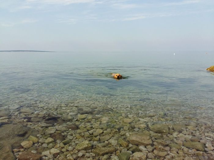 Dogs Of EyeEm Golden Retriever Dog Swimming Sea Seaside Sea And Sky Seascape Sea View Relaxing Enjoying Life Natural Beauty Water_collection Scenics Clouds And Sky Animals Color Palette Eyeemphoto Miles Away Live For The Story Sommergefühle Pet Portraits
