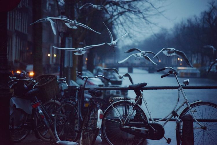 The benefits of waking up early in the morning Seagulls Amsterdam Canal Early Morning Misty Morning Misty Beauty In Nature Malephotographerofthemonth Eye4photography  EyeEm Gallery EyeEm Wintertime From Where I Stand Lifeisbeautiful City Winter Cold Temperature Tree Bicycle Weather Rainy Season