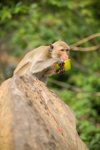 Close-up of monkey sitting on a tree