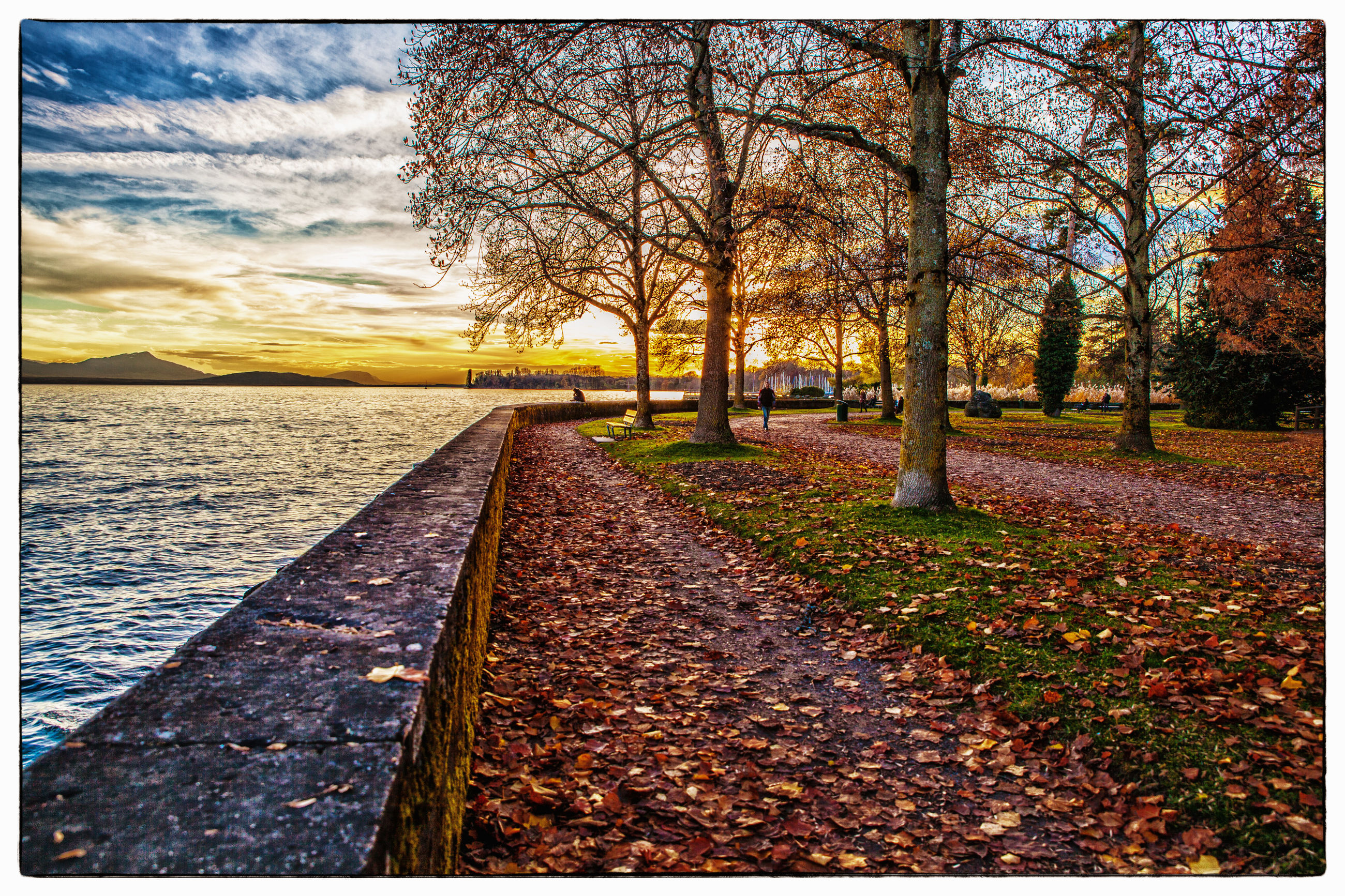 sky, sunset, tree, outdoors, nature, no people, growth, beauty in nature, day, scenics