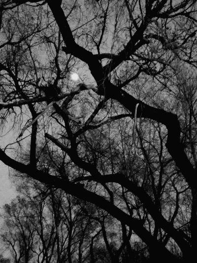Branches Park Blackandwhite Urban Nature