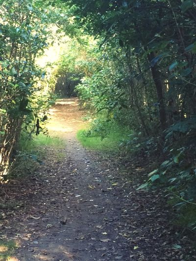My current favourite path Paths Green Sunlight No People Walking