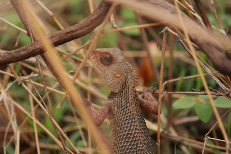 lizard in wild EyeEm Selects Tree Iguana Reptile Confined Space Living Organism Branch Wilderness Lizard Close-up Animal Eye Animal Skin Skin Nature Reserve Wildlife Reserve HEAD