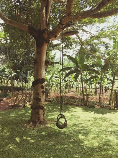 Tree Swing Rope Swing No People Outdoors Green Color Nature Grass Hanging Branch