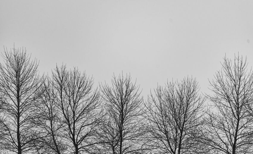 Bare trees Gloomy Bare Tree Wintertime Trees Sky Low Angle View Tree Plant No People Nature Day Clear Sky Beauty In Nature Outdoors Growth