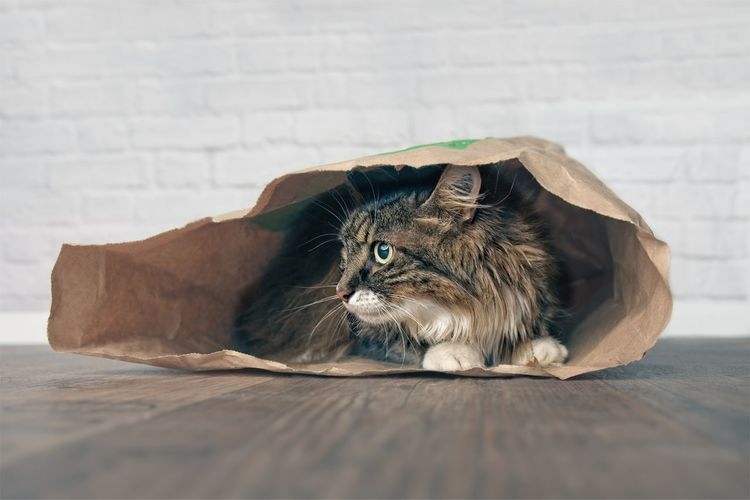 Cat Sitting In Paper Bag On Floor At Home