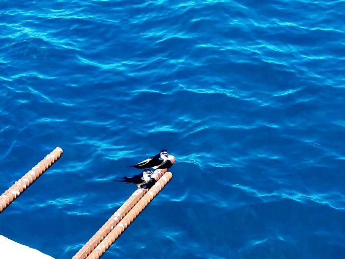 Birds Hello World EyeemPhilippines Deep Blue Lovers Tweetybird Port Of Balingoan EyeEm Nature Lover Sommergefühle