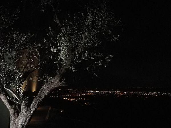 Olive Tree by night Fano