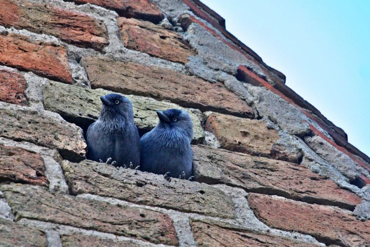 Low angle view of birds on wall