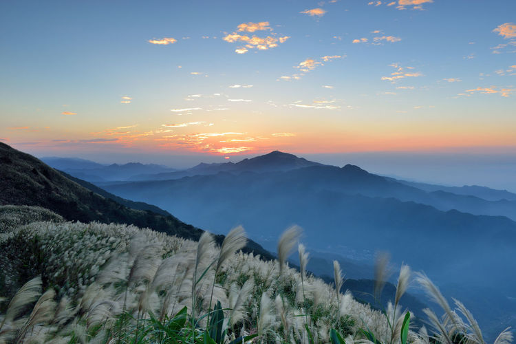 Autumn dusk mountains, open Mansou flowers, sunset sunshine Yao in the Maucao. Autumn Miscanthus Sunlight Beauty In Nature Clouds Day Dusk Fall Flower Growth Landscape Mist Mountain Mountain Flowers Mountain Range Nature No People Outdoors Peaceful Scenics Sky Sunset Tranquil Scene Tranquility Tree