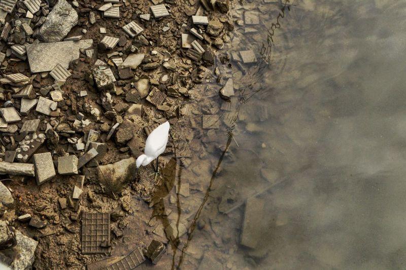 Stork Water No