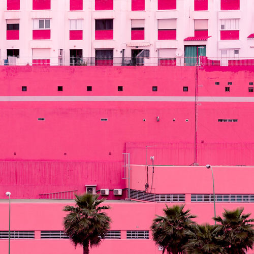 Palm. canary island. plants on pink concept art