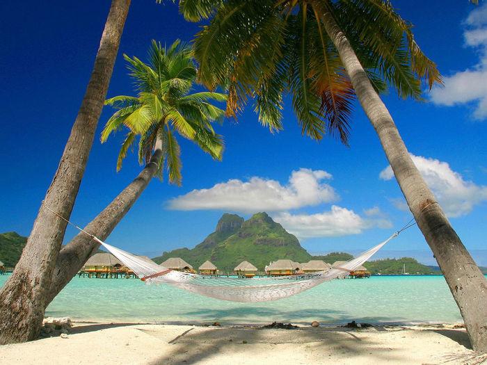 Life in a paradise kills me. Beach Sea Tree Nature Beauty In Nature Travel Island Vacations Travel Destinations Bora Bora  August Love Beautiful Nature Art Picoftheday Blue First Eyeem Photo