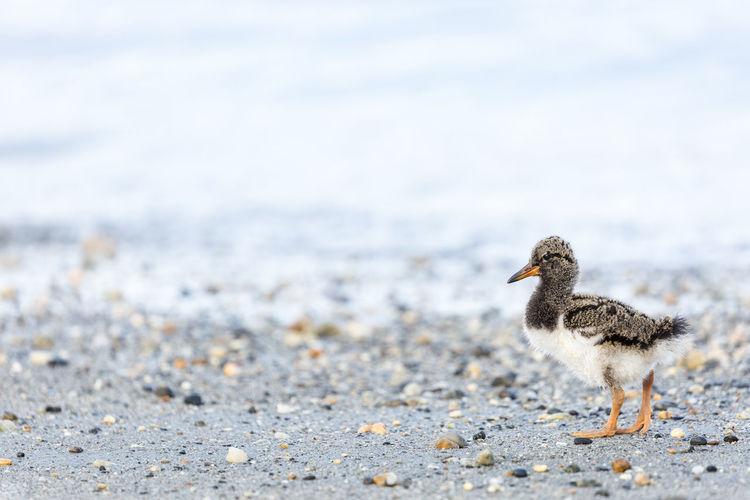 Young bird at beach