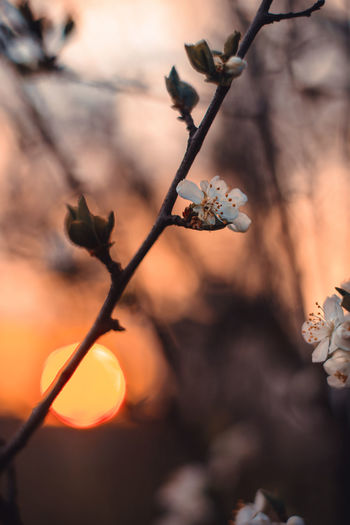 Plant Focus On Foreground Close-up Growth Beauty In Nature Nature No People Tree Branch Twig Flower Selective Focus Outdoors Flowering Plant Orange Color Sunset Plant Stem Day Vulnerability  Fragility