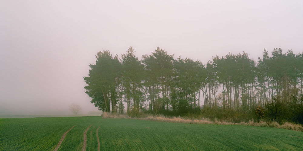 Foggy meadow. [56/365] 2016.12.04 Afternoon Agriculture Beauty In Nature Day Fog Foggy Growth Landscape Meadow Nature No People Nobody Outdoors Panorama Scenery Scenics Serene Outdoors Tranquil Scene Tree