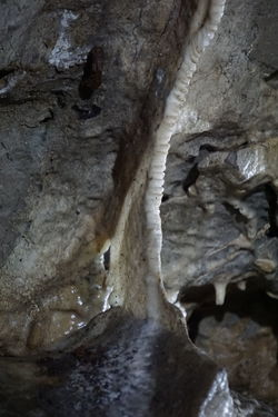 Stalactite  Beauty In Nature Beauty In Nature Cave Close-up Day Full Frame Geological Geological Formation Geology Growth Indoors  Indoors  Nature No People Pattern Physical Geography Rock - Object Rock Formation Rough Stalacmite Stalactite  Stalagnate Textured  Tree Trunk