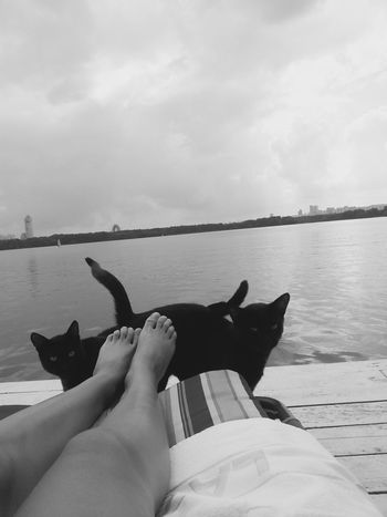 Twins Black Cats Legs Relax Conteplation Welcome To Black Pet Portraits