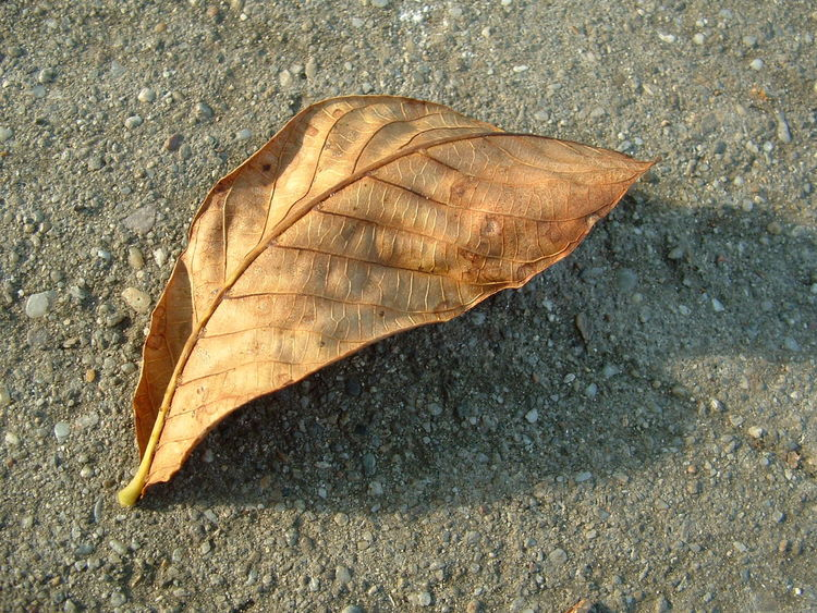 Lonely Leaf Autumn Brown Leaf  Close-up Concrete Fall Leaf Leaf Loneliness Lonely Nature One Leaf Street