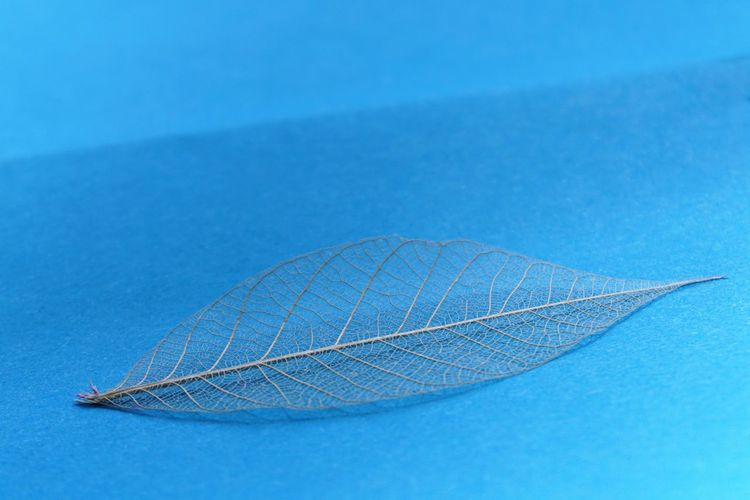 High angle view of leaf against blue background