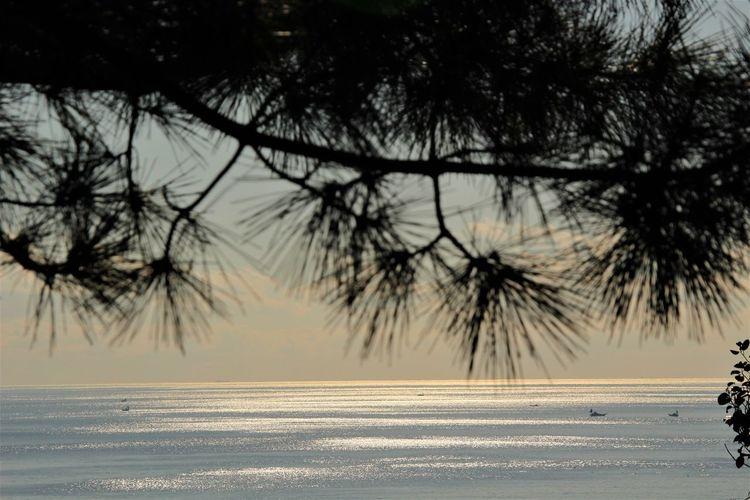 Beauty In Nature Enoshima Kanagawa Nature Outdoors Sea Silhouette Tree Winter
