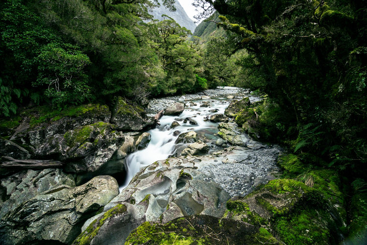 the chasm Beauty In Nature Day Forest Green Color Mountain Nature No People Outdoors Rock - Object Scenics Stream - Flowing Water Tranquility Tree Water Waterfall