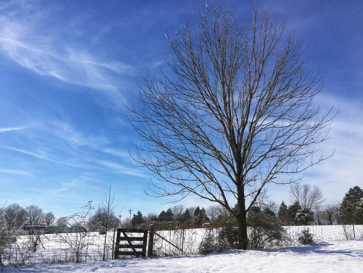 Winter is here! Tennessee Rural Scene Blue Sky Tranquil Scene Scenics Frozen Branch Day Outdoors Landscape Cold Tranquility Beauty In Nature Weather Nature Tree Bare Tree Snow Winter Cold Temperature EyeEm Best Shots