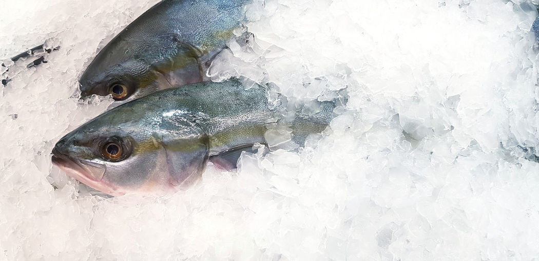 High angle view of fish in ice for sale