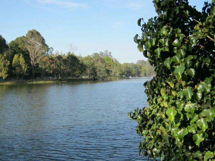 EyeEm Nature Lover Simple Things In Life Beautiful From My Point Of View Kodaikanallake Tamil Nadu India