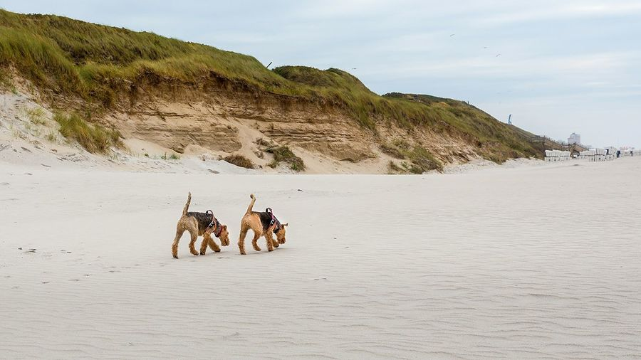 Dogs Walking At Beach Against Sky