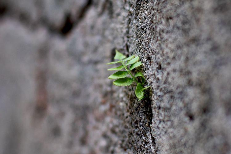 Tree Leaf Ivy
