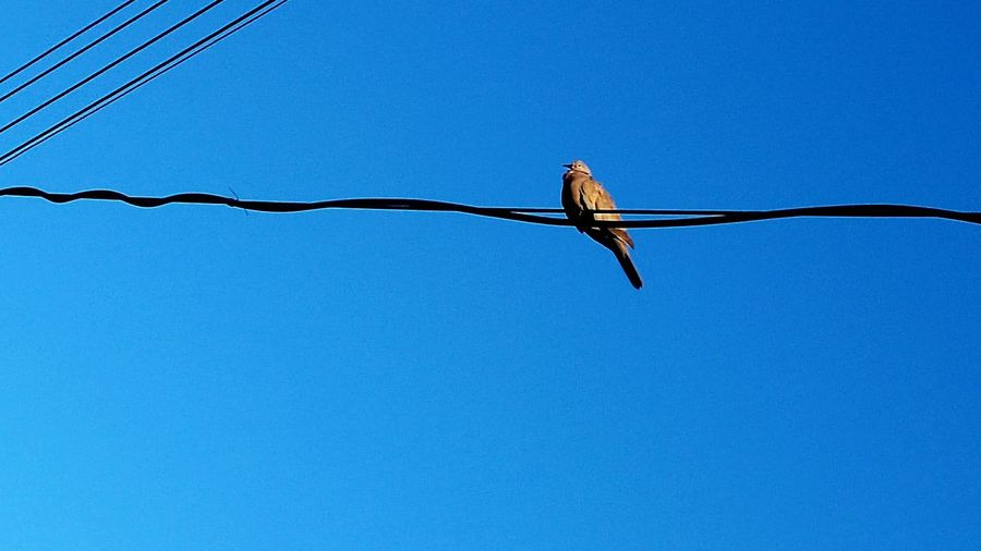 I Am A Bird !!! I Wanna Dive Into This Sky But This Blue Is Too Deep !!! Admire It With Me .... Amazing Beauty in my City Wires 43 Golden Moments On The Way Colors Dove Animals Colour Of Life Adventures In The City
