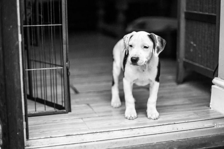 Portrait of dog sitting by entrance