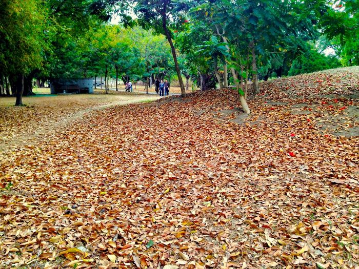 Tree Leaf Trees Park Defoliation