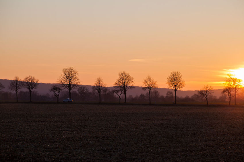 Bare Tree Beauty In Nature Day Field Grass Landscape Nature No People Orange Color Outdoors Rural Scene Scenics Silhouette Sky Sunset Tranquil Scene Tranquility Tree
