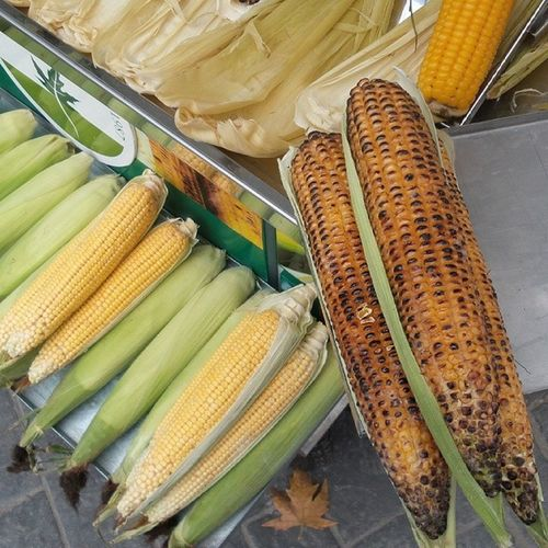 Bursa Osmangazi Eat Amazing cute maize corn mangal yeşil colors green