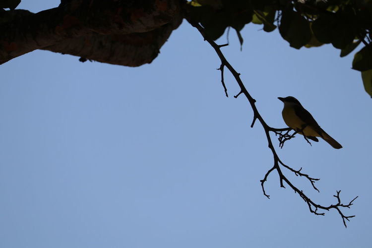 Animal Themes Beauty In Nature Bird Bird Perched Little Bird Nature One Animal Outdoors Side View