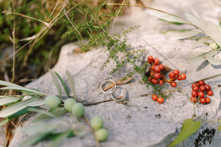 Close-up of fruits growing on rock